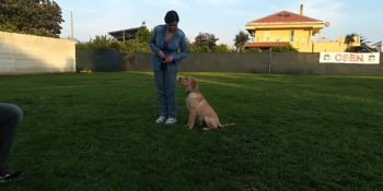 La scuola per cani